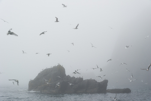 When seabirds go wild - Middle Cove