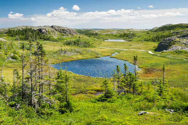 Near White Water Pond - Lion's Den Trail, Fogo