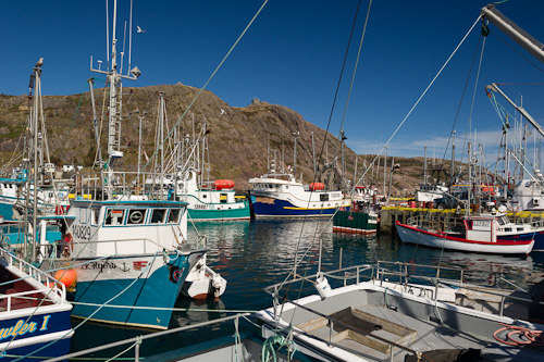 Fishing boats in the harbour - St. John's