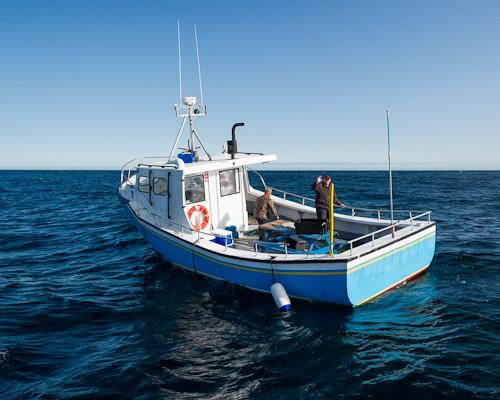 Cod fishermen - North Atlantic