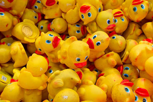 Rubber Ducks, waiting to be sponsored - Rennie's River, St. John's