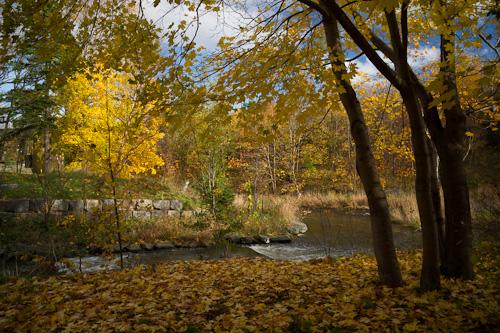 Fall colours - Bowring Park