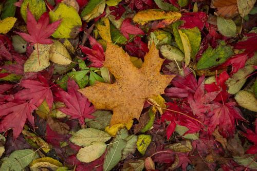 Fall foliage - Bowring Park