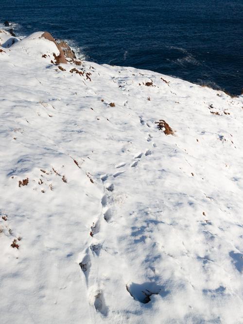 Fox tracks in the snow - Cobbler Path