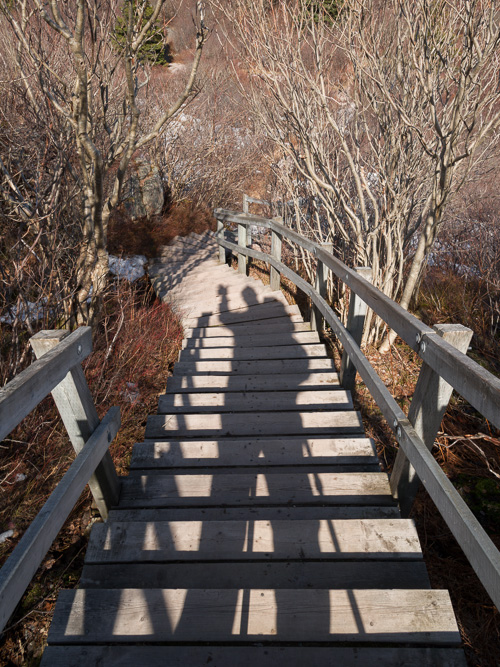 Down the stairs - Cuckolds Cove Trail