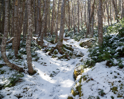 Snow covers the forest trails - Biscan Cove Path