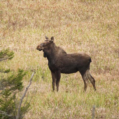 May 2013 - La Manche Provincial Park