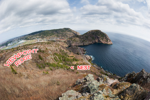 Viewpoint and nest location - Cuckolds Cove Trail