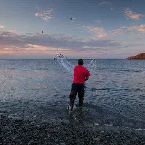 Catching capelin - Middle Cove beach