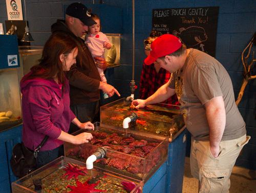 Touch Tank - Petty Harbour mini aquarium