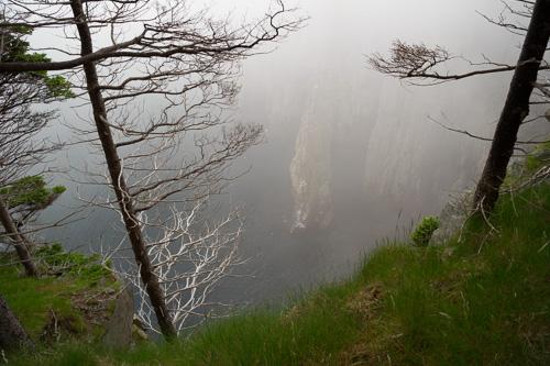 Drop Cove Fog - Spout Path