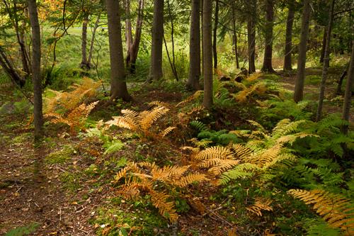 Fall colours - Bowring Park, St. John's