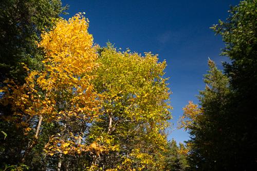 Fall colours - La Manche