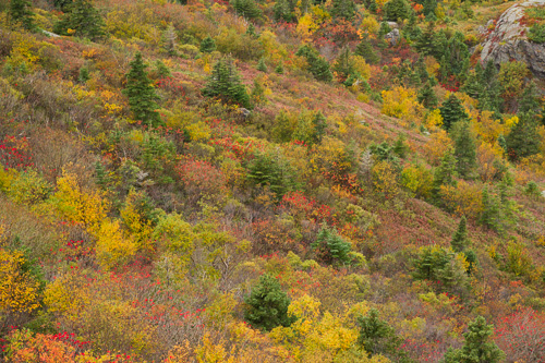 Fall foliage - South Side Hills