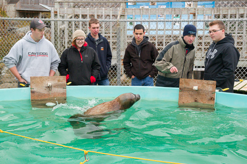 Helping out with the seals - Ocean Sciences Centre, Logy Bay