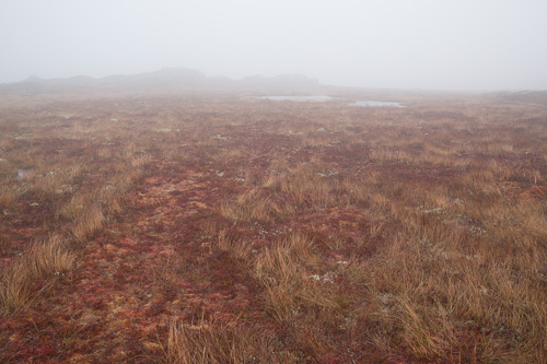 Foggy barrens - Cape Spear