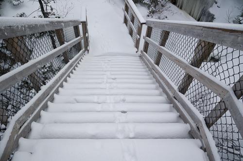 Fox tracks down the stairs - Stiles Cove Path