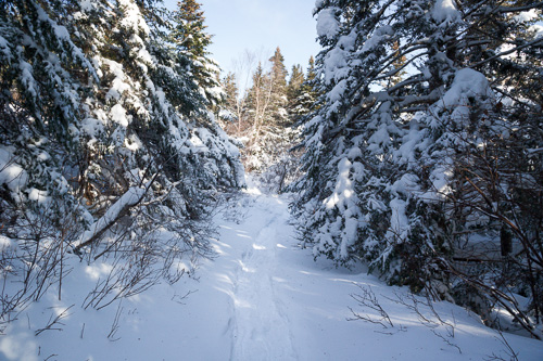 Fresh snowshoe path - Hungry Hill