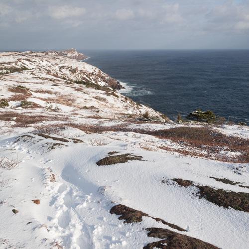 Fresh snow on the trail - Cape Spear Path