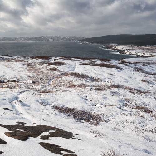 View from North Head, towards Maddox Cove & Petty Harbour - Cape Spear Path