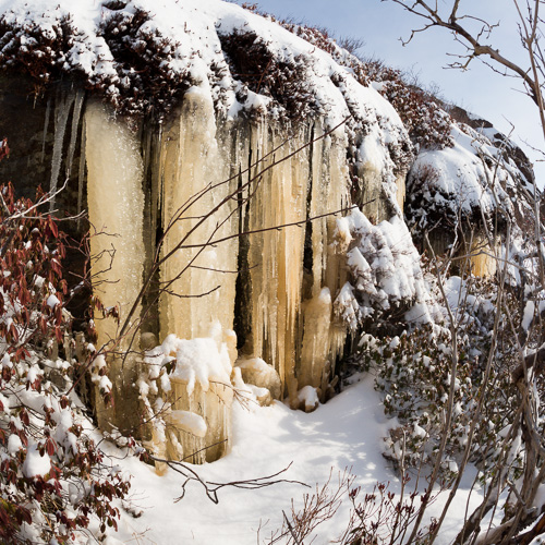 Yellow icicles - Sugarloaf Path