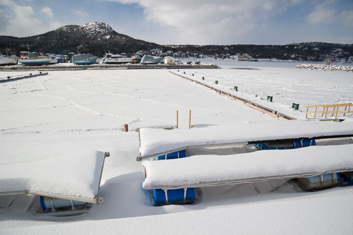 Marina, frozen over completely - Holyrood