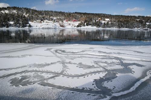 Seal tracks on the ice - Holyrood, North Arm