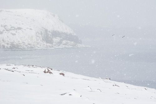 Flurries and the Cape Bay - Cape Spear