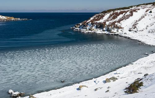 More slushy sea ice - Ferryland
