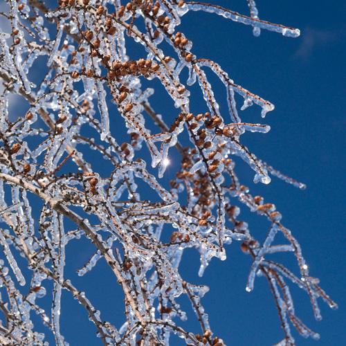 Frozen rain - Torbay