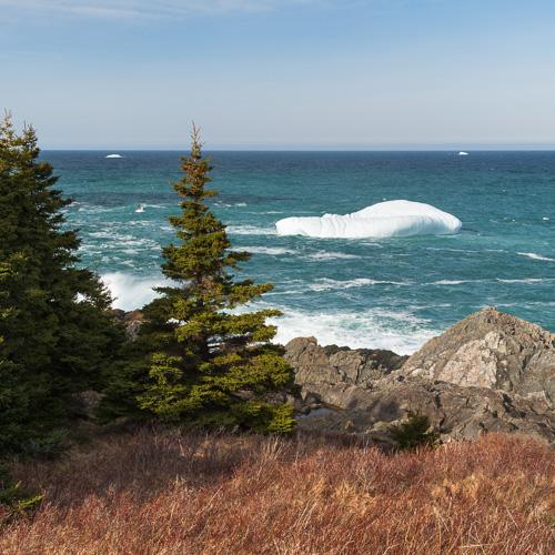Icebergs near and far - Pouch Cove