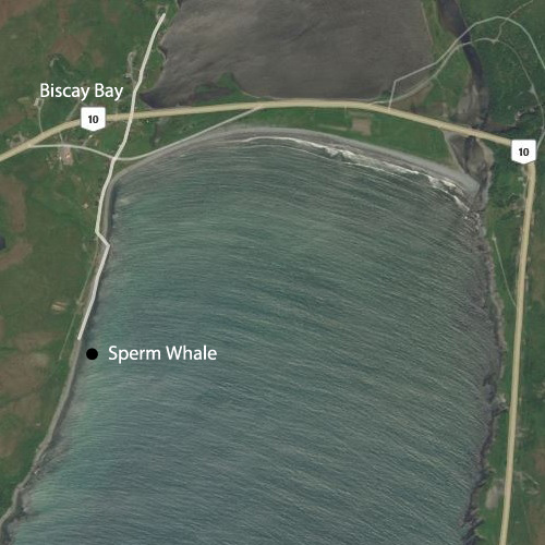Sperm Whale location in Biscay Bay, Newfoundland