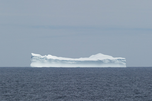 Large icebergs stay on the horizon - Island Meadow Path