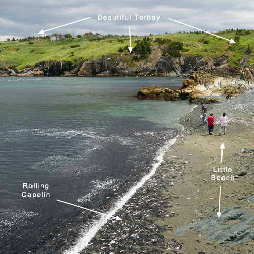#1: Little Beach in Torbay, Father Troy's Trail