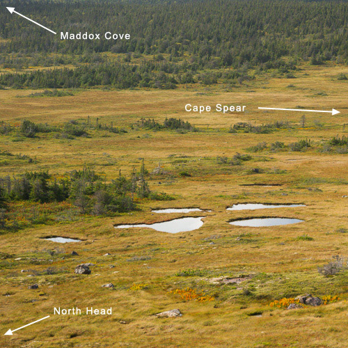 #4: Ponds in the Cape Marsh, Cape Spear Path