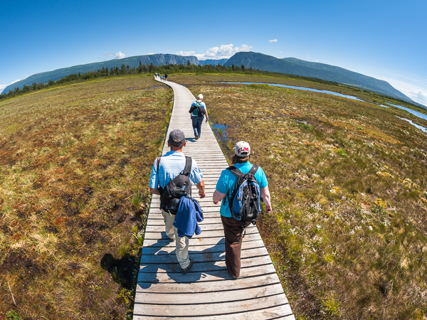 Boardwalks through the marshes - Gros Morne NP