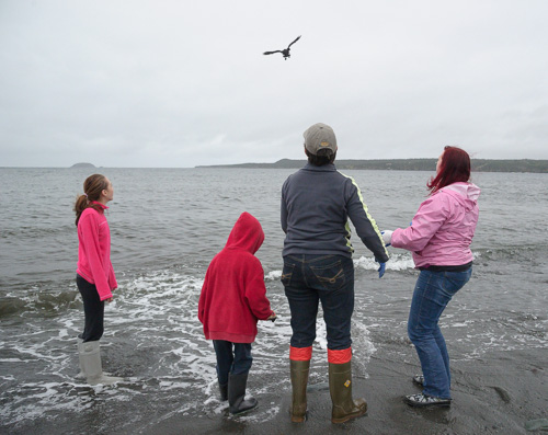 Puffin release - Witless Bay