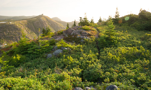 Blueberry bushes and a great sunrise view - Deadmans Bay Path