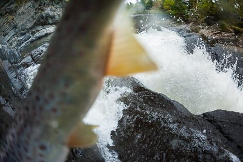 Fish in my fisheye lens - Bowring Park, St. John's