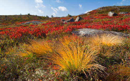 Tussock grass - Motion Path