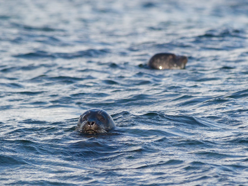 Seals in the Bight - Motion Path