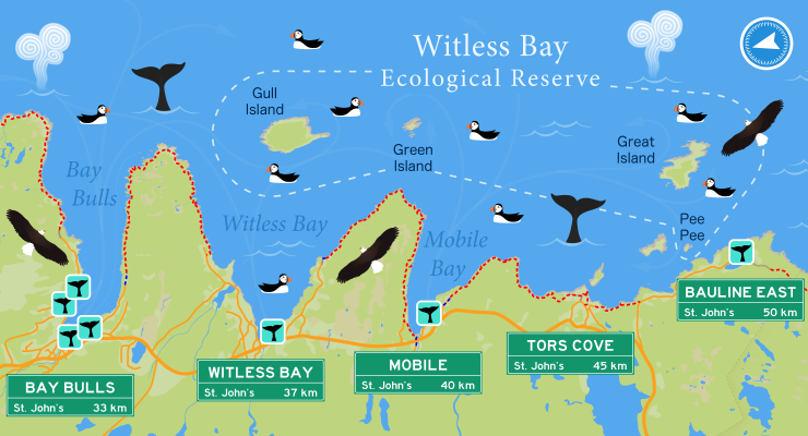 Boat tours and hiking trails near the Witless Bay Ecological Reserve