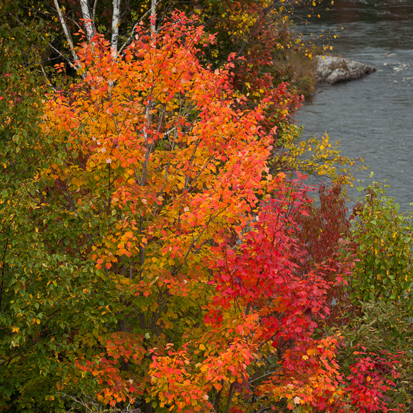Fall colours- Terra Nova National Park
