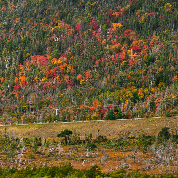 Fall colours - Gros Morne National Park